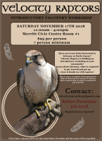 Introductory Falconry Workshop